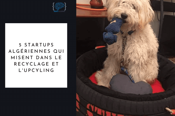 Startups algériennes upcycling recyclage